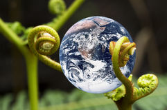 Living Planet Earth. Image of planet earth with green ferns portraying a living earth Stock Image