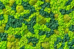 Living plant foliage as a natural background. Plant foliage as a natural living background stock images