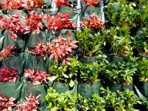 Living plants wall Royalty Free Stock Photos