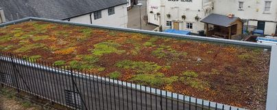 Living Roof Garden. Photograph of a green sedum roof, Devon Wildlife Trust. A great environmental option and habitat for wildlife Stock Photography