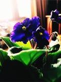 Living Room Bloom stock image