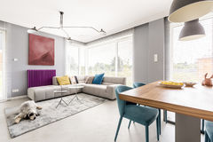 Living room with dining area. Contemporary living room for family with gray walls, beige corner sofa, big windows, painting, purple radiator and blue chairs in Royalty Free Stock Photo
