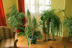 Living room with green plants. Living room corner with green plants and carpet Royalty Free Stock Photos