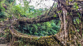 Living Root Bridges of Meghalaya - Double Decker Royalty Free Stock Photos