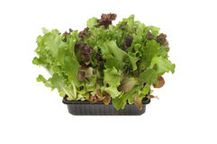 Living salad Stock Photography