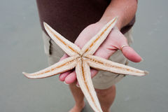 Living Starfish Stock Images