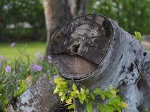 Living stumps Stock Photography