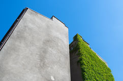 Living wall. Old building overgrown with plants. Landscape orientation Stock Photo