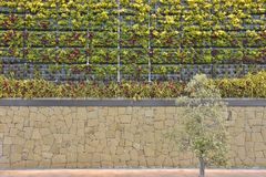 Living wall with plants Malaga Spain. Green wall vertical garden , facade with plants in Malaga Southern Spain Europe stock photo