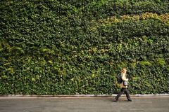 The largest vertical garden in London in Fenchurch Street living wall contains around 52,000 plants. A living wall uses technology which allows plants to grow royalty free stock image