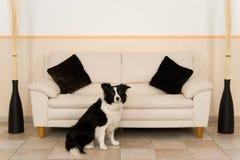 Livingroom. A dog in the livingroom Royalty Free Stock Image