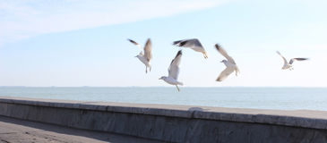 The Livingstons. Seagulls taking off by the seaside Royalty Free Stock Image