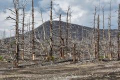 Livlöst ökenlandskap av den Kamchatka halvön: Dött trä (Tol Royaltyfria Foton