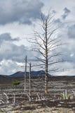 Livlöst ökenlandskap av den Kamchatka halvön: Dött trä (Tol Arkivfoton