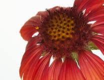 Livlig blom Arkivbild