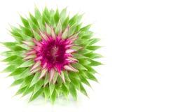 Livlig exotisk blomma Royaltyfri Fotografi