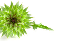Livlig exotisk blomma Arkivfoton