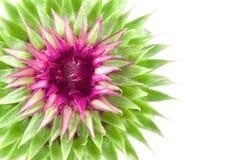 Livlig exotisk blomma Royaltyfri Foto