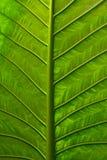 livlig leaf Royaltyfri Bild