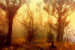 livlig skogsoluppgång royaltyfria bilder
