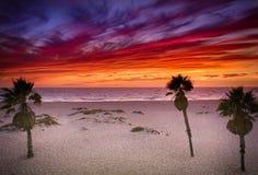 Livlig solnedgång på den sydliga Kalifornien stranden med palmträd Arkivfoto