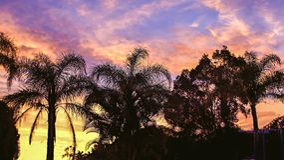 Livlig tropisk soluppgång australasian royaltyfri fotografi