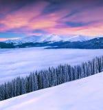Livlig vintersoluppgång i Carpathian berg med snö täckte f royaltyfri bild