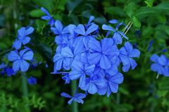 livliga blåa blommor solig dag Arkivbilder