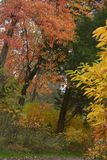 Livliga färger markerar fortgången av nedgångsäsongen på denna Murfreesboro, den Tennessee parkoen royaltyfri fotografi