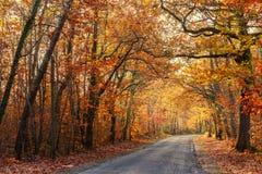 Livliga nedgångfärger i skog Arkivfoto