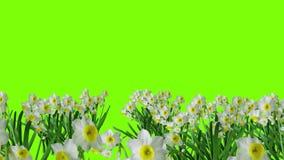 Livligt påskkort med diagramet av Jesus på en grön skärm med blommor och text