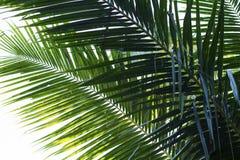 Livligt tonat foto för kokosnötpalmträdblad Cocobladcloseup Abstrakt cocopalmbladbakgrund Arkivbild
