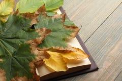 Livre avec des feuilles d'automne Photographie stock