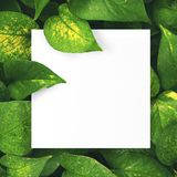 Livre blanc sur le fond vert de feuille avec l'espace libre central pour le texte ou le produit de montage Image stock