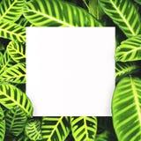 Livre blanc sur le fond vert de feuille avec l'espace libre central pour le texte ou le produit de montage Image libre de droits