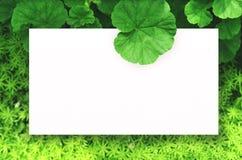 Livre blanc sur le fond vert de feuille avec l'espace libre central pour le texte ou le produit de montage Photos stock
