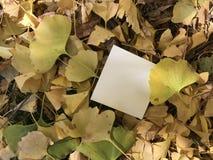 Livre blanc vide avec de belles feuilles jaunes et brunes de ginkgo Photographie stock