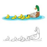 Livre de coloration Canard et canetons de mère Photo stock