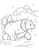 Livre de coloriage d'ours blanc Photographie stock