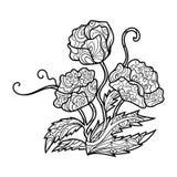 Livre de coloriage de fleur de pavot pour le vecteur d'adultes Photos libres de droits