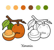 Livre de coloriage pour des enfants : fruits et légumes (ximenia) Photographie stock