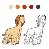 Livre de coloriage, races de chien : Lévrier afghan Images stock