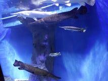 Livre de Guinness du monde de mer des records mondiaux image stock