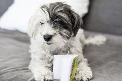 Livre de lecture de chien Photos libres de droits