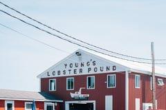 Livre de Young de homard, à Belfast, Maine photo libre de droits