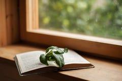Livre et fenêtre images libres de droits