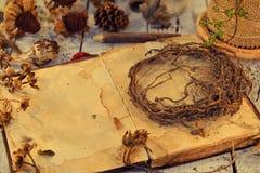 Livre ouvert de journal intime avec l'espace de copie, de vieilles racines et graines sur des planches images libres de droits