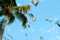 Livre para voar… Foto de Stock