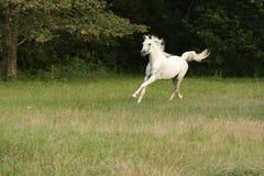 Livre Running Fotos de Stock Royalty Free