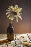 Livre toujours blanc en verre de gerbera de la vie Images stock